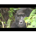 Healthy Gorillas, Healthy Communities - CNN African Voices - Part 2