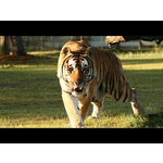 Big Cat Rescue 2014