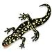 Mr. Barranca's Salamander Stride Team