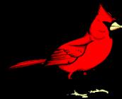 Cardinals banner