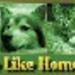 NO PLACE LIKE HOME ANIMAL RESCUE