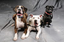Top Dogs banner
