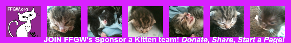 Sponsor a Mom and Her Kittens banner