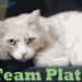 Plato's Team