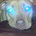 Super Pup