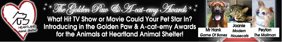 2013 Golden Paw & A-cat-emy Awards! banner
