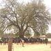 TAYLORS FALLS BOOKS FOR AFRICA WALKATHON Team