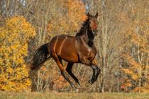 Team Help-a-Racehorse banner