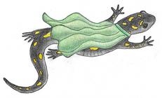 Salamander Superheroes banner