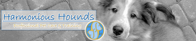 Harmonious Hounds Pet Fest Dog Walk Team banner