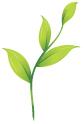 Size 550x415 leaf