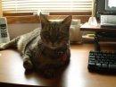 Size 550x415 desktop cat.bmp conv