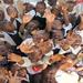 The Jacaranda School kids