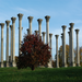 Capitol Columns in the Spring