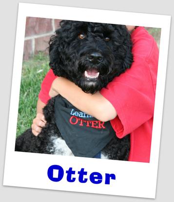 Size 550x415 otter hug