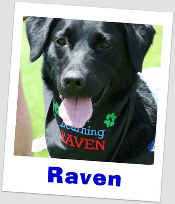 Size 550x415 raven