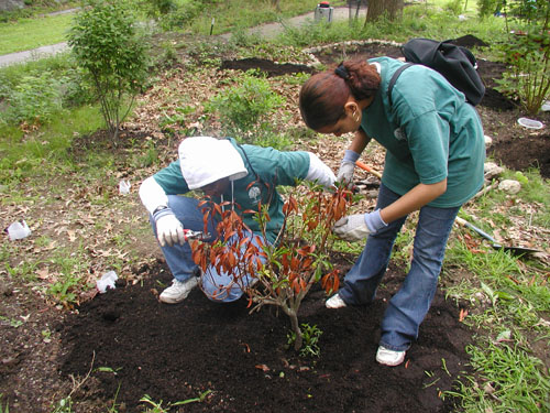 Size 550x415 youth crew planting native understory