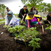 Photo of CAPI Community Gardeners from the Making it Better Minnesota Statewide Campaign.