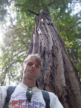 Size 550x415 me tree