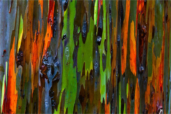 Size 550x415 bark abstract c2a9 2011 christopher martin 23421