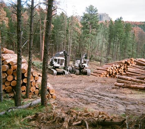 Size 550x415 palmer gulch timber sale sept 8 2011%5b1%5d