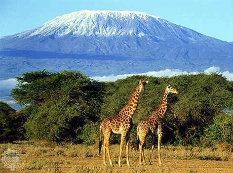 Size 550x415 mount kilimanjaro 2