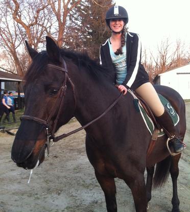 Size 550x415 horse