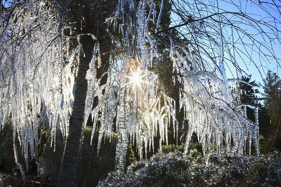 Size 550x415 icicles hanging from tree branches craig tuttle