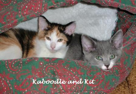 Size 550x415 kaboodle%20and%20kit%20101713%20%282%29