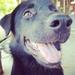 Soi Dog Fundraiser!!