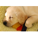 A 6-week-old yellow Labrador retriever puppy sleeps on a soft bed with his toys.