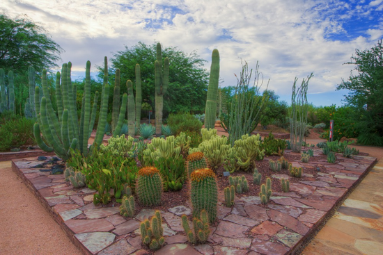 Size 550x415 cactus%20oeg