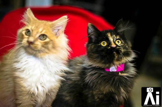 Size 550x415 kittens
