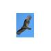 Turkey Vultures Team - McClung/Rektorik