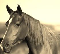 Size 550x415 horses2014healthy