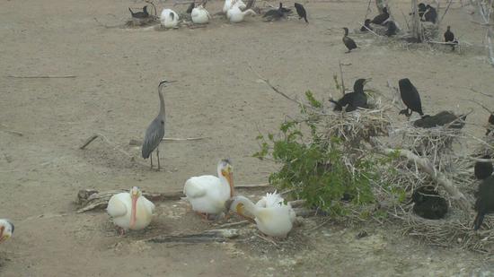 Size 550x415 pelican 1 05 22 2013 114011am