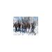 Anna Landeene fundraising for Peak 7 Ski to Sea 2014: Team Spokane 1