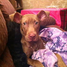 Zada the brave puppy- Needs your help!