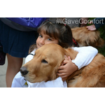 Size 150x150 gavecomfort the lcc k 9 comfort dogs visit napa valley following the earthquake