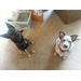 Andrea & Grady Shuck fundraising for 2015 Fast and the Furry - Twin Cities Pet Rescue