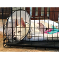 Size 120x120 fitzroy collar crate