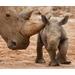 Jaime Auker's 2015 Bowling for Rhinos Team