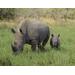 Lindsay Ruffner's 2015 Bowling for Rhinos
