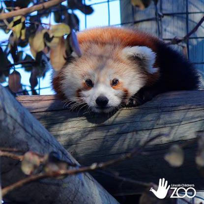Size 550x415 pandas