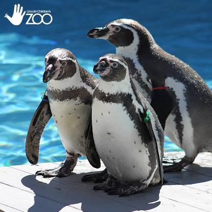 Size 550x415 group penguins