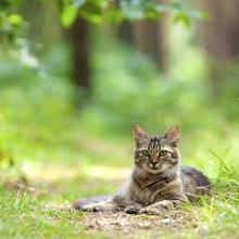 Help Maui's Free-Roaming Cats