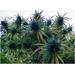 Medicinal Marijuana for Cancer Patients