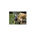 2015 - Kristen is Walking for Farmed Animals