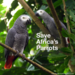 Save Africa's Parrots