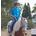 Pony Up! 2015